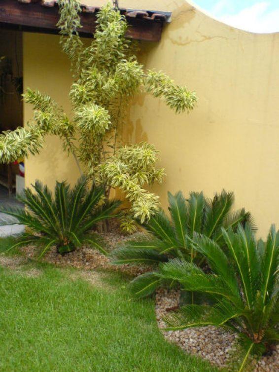 Fotos De Plantas Para Jardim Externo Quotes~ Plantas De Jardim Fotos E Nomes